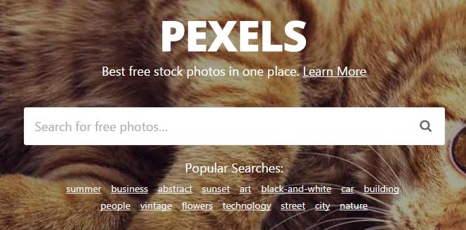 Barre de recherche Pexels.com